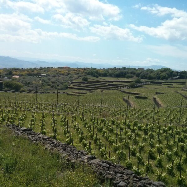Etna, a volcanic wine experience