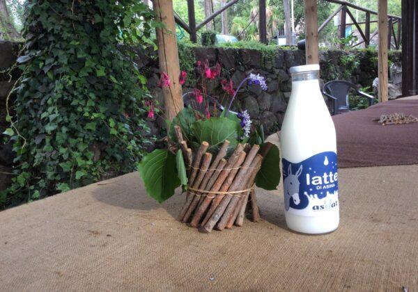 Asilat, an experience as good… as milk