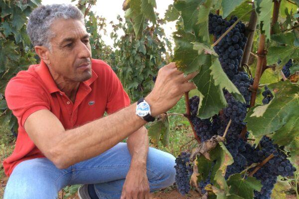 Manenti, l'ingegnere del vino